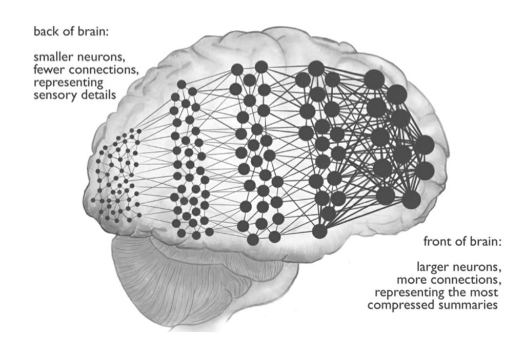 Brain diagram from book showing different neuronic networks that sense, summarise and abstract meanings